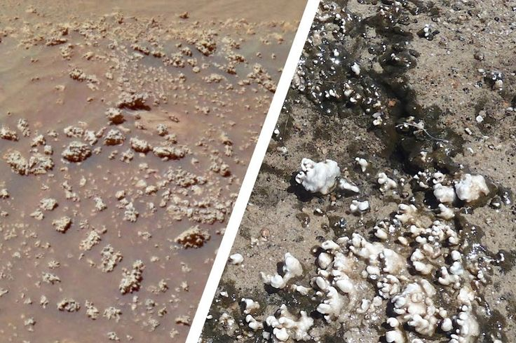 To Find Life on Mars, Perhaps We Should Look Here When exploring Gusev Crater in 2007, NASA's Spirit rover discovered some curious silica deposits — were they formed by ancient Martian life?
