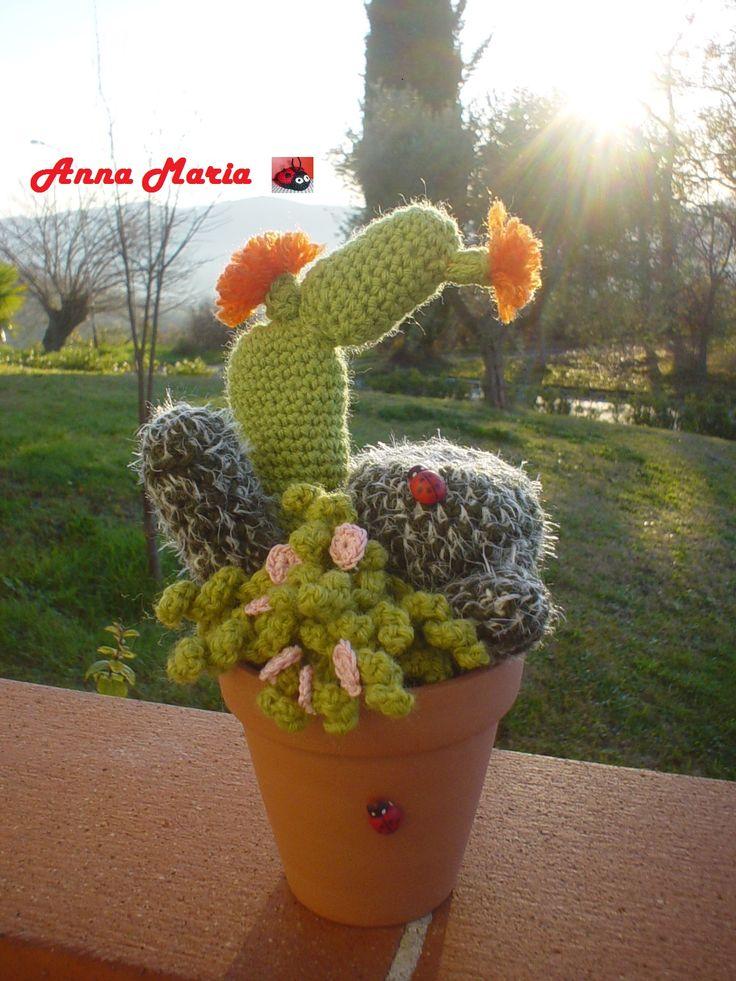 composizione piante grasse Flores, Plantas y Cactus