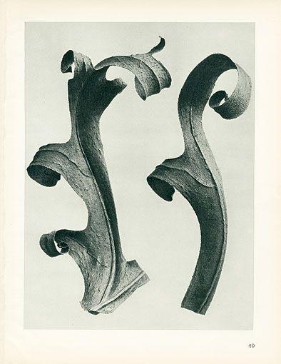 Karl Blossfeldt Photogravures Urformen der Kunst 1929