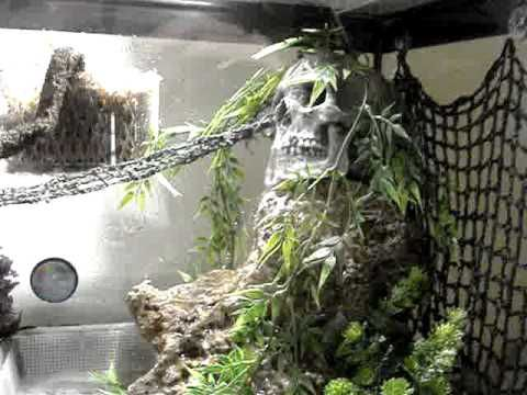 Timothy GW's 80 gal hermit crab tank with cool skull mountain waterfall
