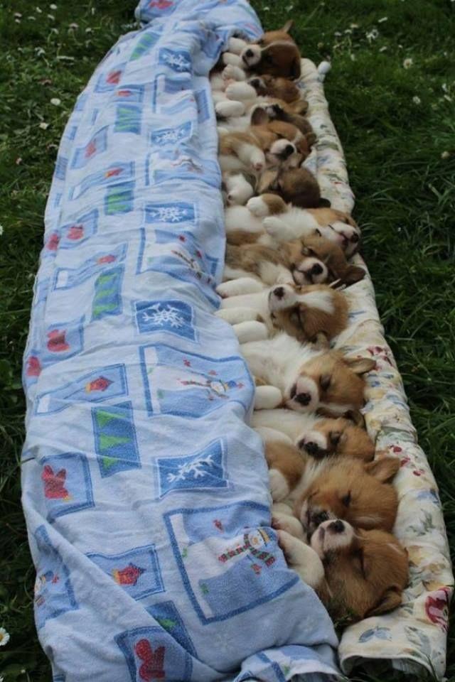 Sleep Tight.......