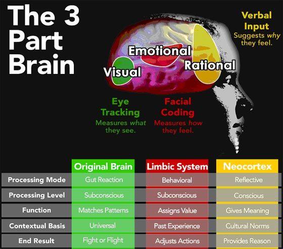 As 3 partes do cérebro envolvidas no processo de aprendizagem, Reptilian Brain, Neo-cortex e Limbic System, e suas características