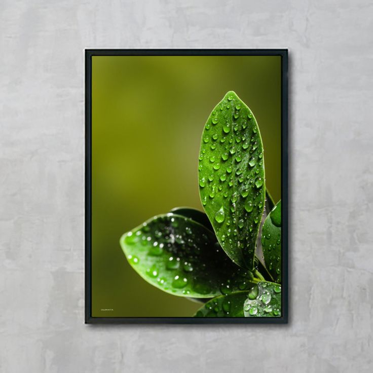 Plakat: Green leaves