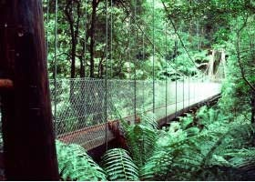 Tarra Valley nestled in Gippsland. Beautiful rain forest and wild life. Great walking tracks.