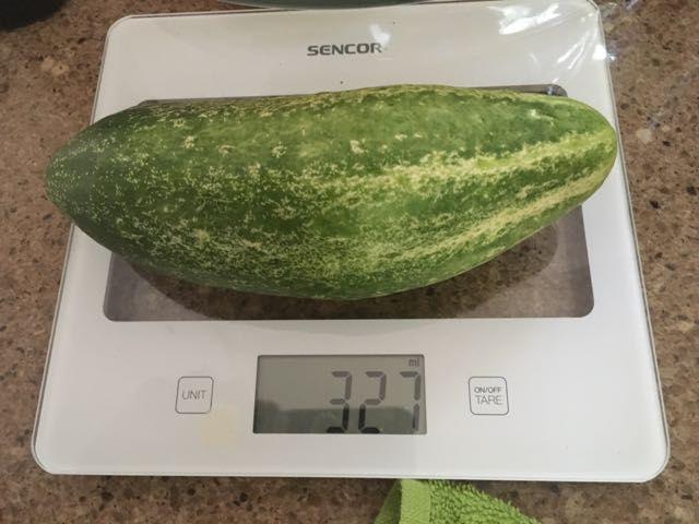 1. vypěstovaná okurčička