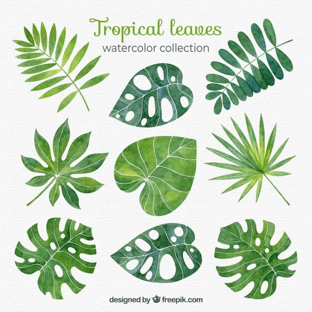 Download Tropical Leaves Collection In Watercolor Style For Free