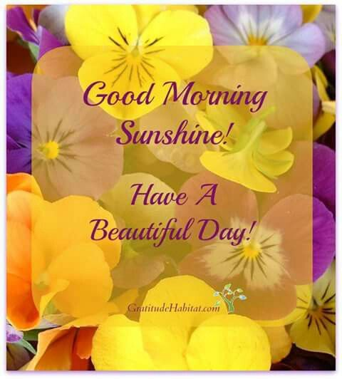 Good Morning Sunshine Have A Beautiful Day : Images about good morning on pinterest