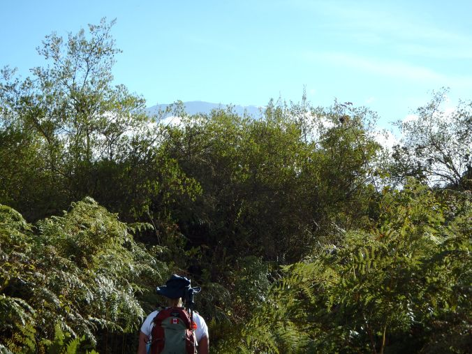 Running For The Gate blogger Brande recalls day 1 of the Rongai Route on Mount Kilimanjaro