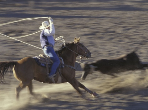 17 Best Images About Team Roping On Pinterest Ties