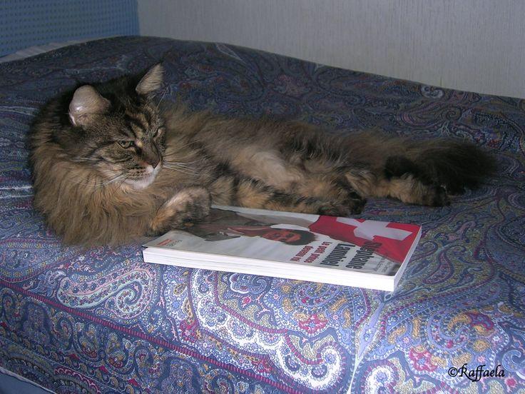 Alice gatta buongustaia ..... anche a lei piace Stéphane Lambiel