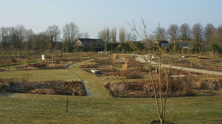 Primer despertar de la primavera en Vlindenhof, el jardín comunitario en Utrecht   El Blog de La Tabla