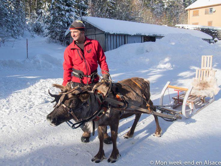Si vous êtes à la recherche d'une activité insolite en Alsace, j'ai ce qu'il vous faut! Une balade en traîneau tiré par un renne dans les jolis paysages vosgiens. Cette activité est proposée par Chemins du Nord, une petite entreprise qui organise également des randonnées en traîneau à chiens, de la canirando, des balades en... Lire la suite →
