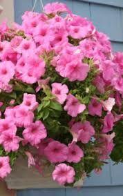 Imagini pentru flori curgatoare verzi