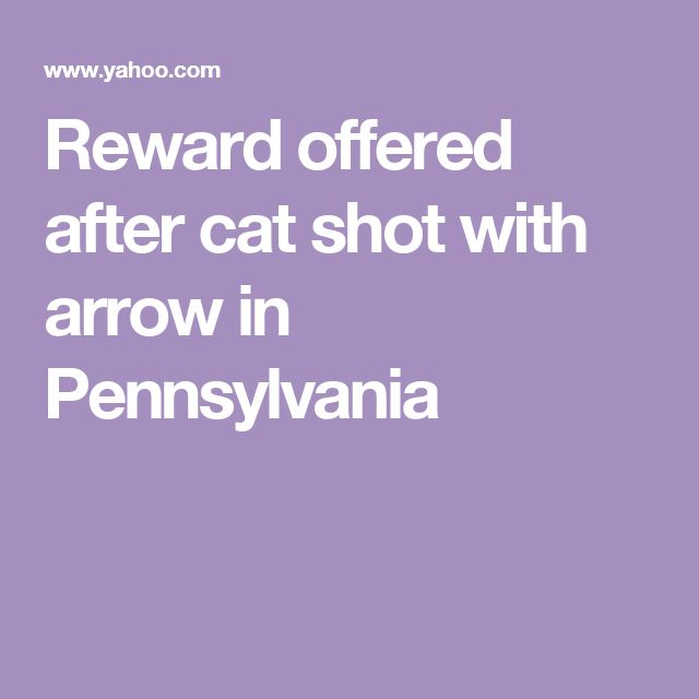 Reward offered after cat shot with arrow in Pennsylvania