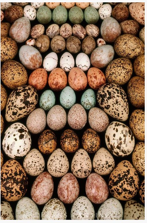 Beautiful birds eggs.