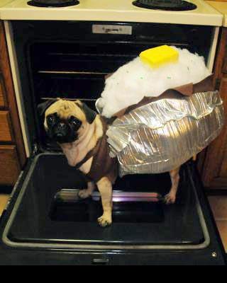 It's a baked pugtato!: Halloween Costume, Animals, Costumes, Dogs, Funny, Pugs, Baked Pugtato, Baked Potato
