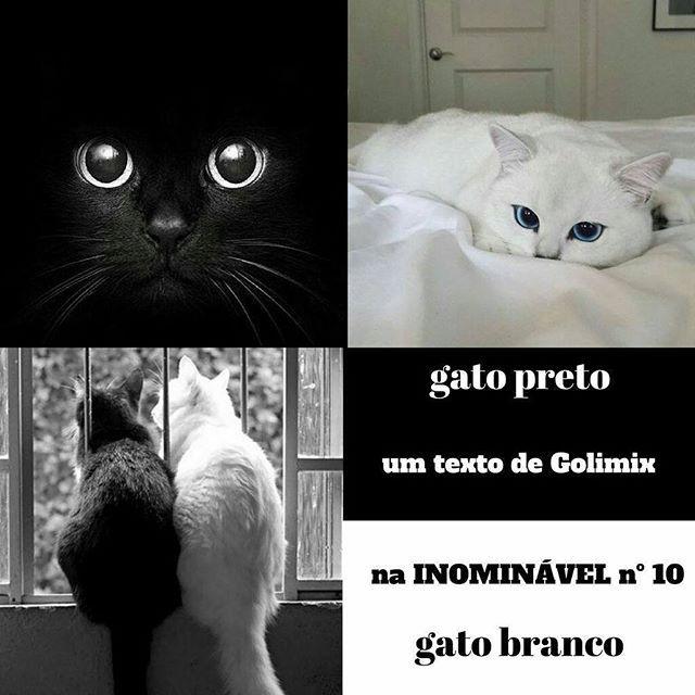 Sabem que os gatos pretos são menos adoptados do que os de outras cores? E que é preciso ter cuidados especiais com os gatos brancos? Há isto e muito mais no artigo que a Golimix escreveu para a #revistainominavel n.º 10.  https://buff.ly/2lVVCGI  #revistadigital #revistaonline #revista #revistaportuguesa #portuguesemagazine #portugal #animais #gatos #gatopreto #gatobranco #bookstagram #instadaily  [link in bio]