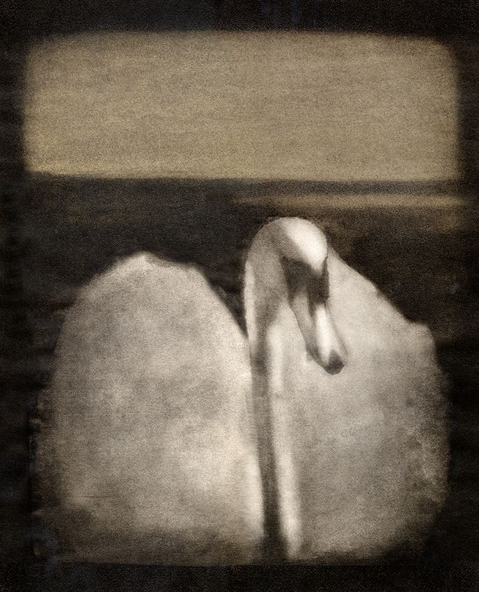 Svane - Swan 1984 Morten Haug invented the Gumoil technique in 1984. Swan was one of Mortens first Gumoil prints that he made at Lillyhammer. It is to find in Preus Museum, the national museum for photography, in Horten. #Gumoil #MortenHaug #art #swan #svane