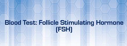 Follicular phase - Wikipedia