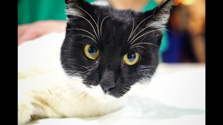 11/28/16 - PLS DONATE - CAT DUMPED IN A GARBAGE CONTAINER WITH MULTIPLE FRACTURES… HELP US SAVE ...