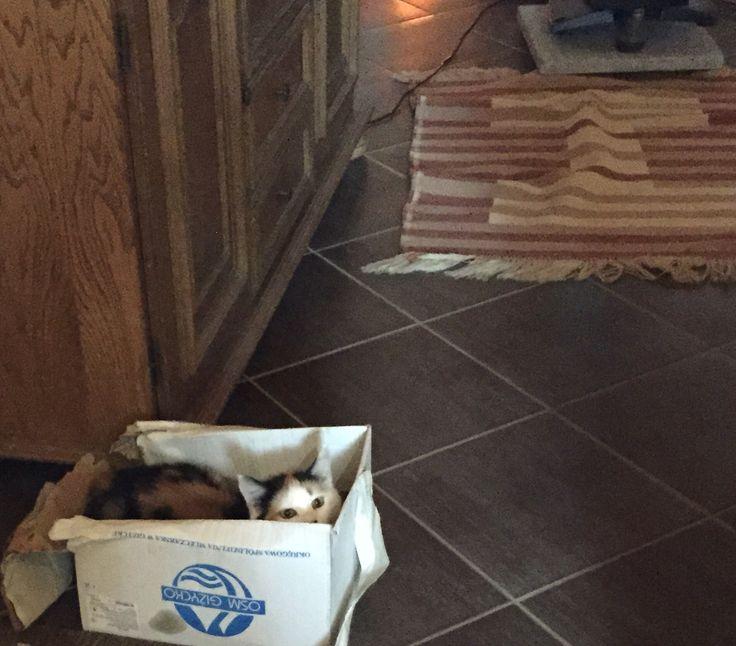 Amy a dobozban ❤️