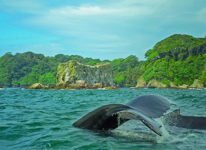 Gorgona, Colombia is visited by humback whales each year between August and October