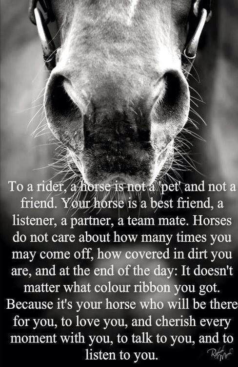 Your horse is not just a pet...