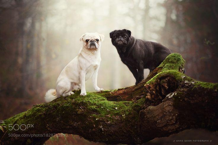 - Ziemlich beste Freunde - by anne_geier via http://ift.tt/2fMNxgs