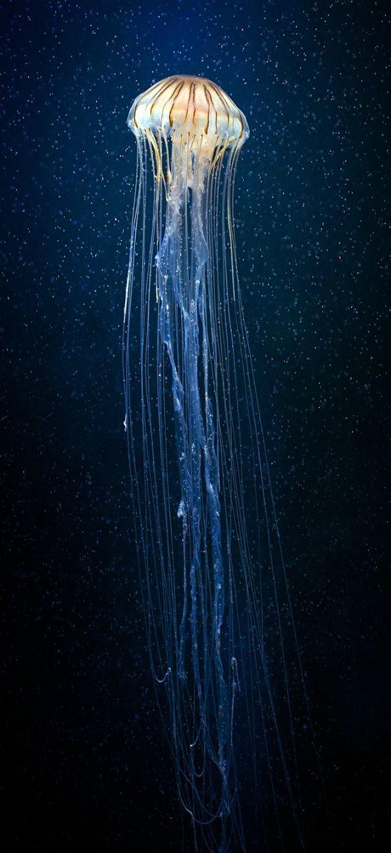 Siempre fui un pez con mis lágrimas de sal... #jellyfish #nature #beauty
