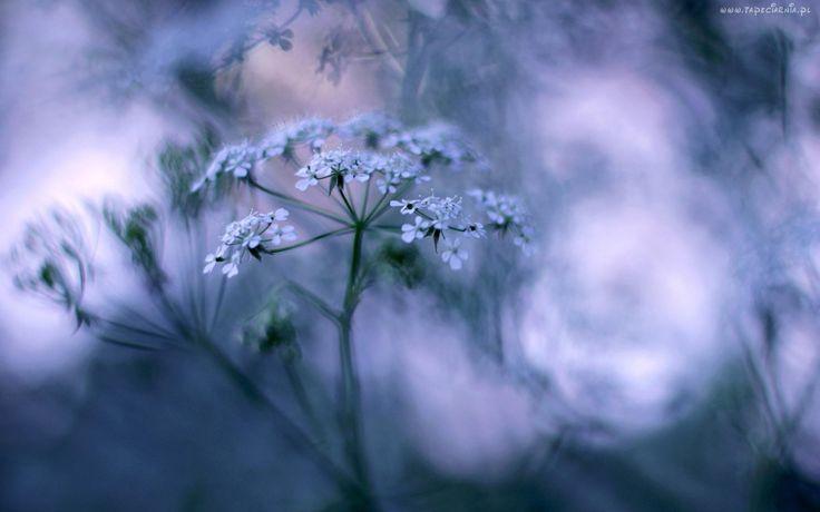 Kwiat, Rozmyte, Tło, Makro