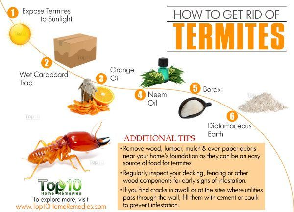 How To Get Rid Of Termites Top 10 Home Remedies Termites Termites Diy Termite Treatment