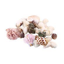 100g Praia Misture Conchas Conchas Do Mar Shell Artesanato Concha Aquário Decoração Náutica(China (Mainland))