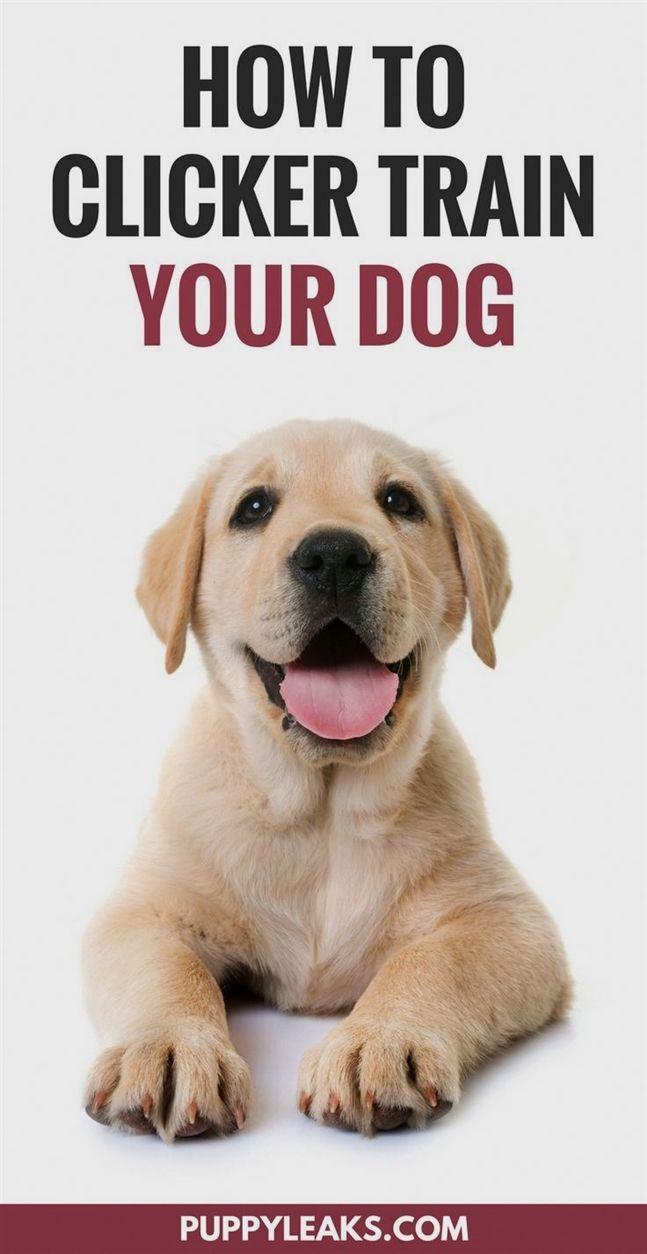 Dog Training Albuquerque Dog Training Resources Dog Training