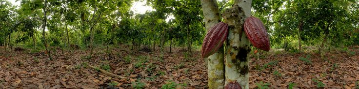 From Wikipedia: https://en.wikipedia.org/wiki/Cocoa_production_in_Ivory_CoastIvory Coast (Côte d'Ivoire) leads the world in production and export of the cocoa beans used in the manufacture of chocolate, as of 2012, supplying 33% of cocoa produced in the world. West Africa collectively supplies two thirds of the world's cocoa crop, with Ivory Coast leading production at 1.65 million tonnes, and nearby Ghana, Nigeria, Cameroon and Togo producing additional 1.55 million tonnes. Ivory Coast…