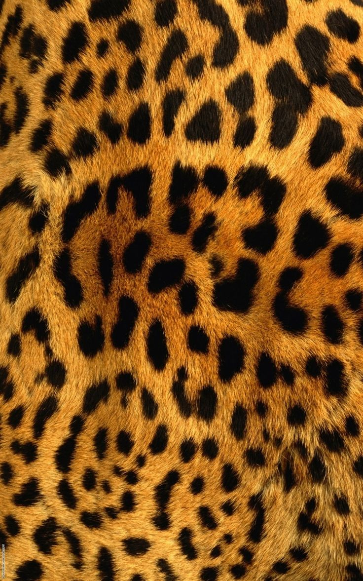 Animal iphone wallpaper tumblr - Find This Pin And More On Wallpaper Iphone By Bessless