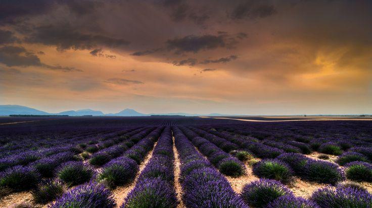 Lavender Landscape by sander chauvel on 500px