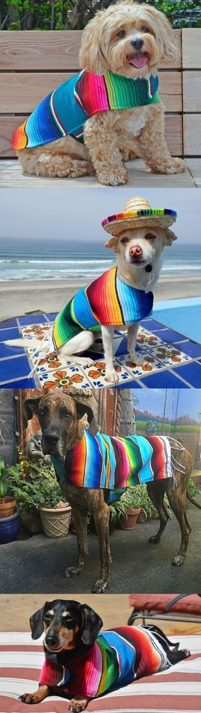 Handmade Dog Ponchos! Use Promo Code: BAJA15 and save 15% off your order. A portion of your order will be donated to help homeless dogs in Mexico.