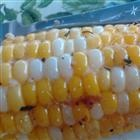 Sweet Grilled Corn Recipe