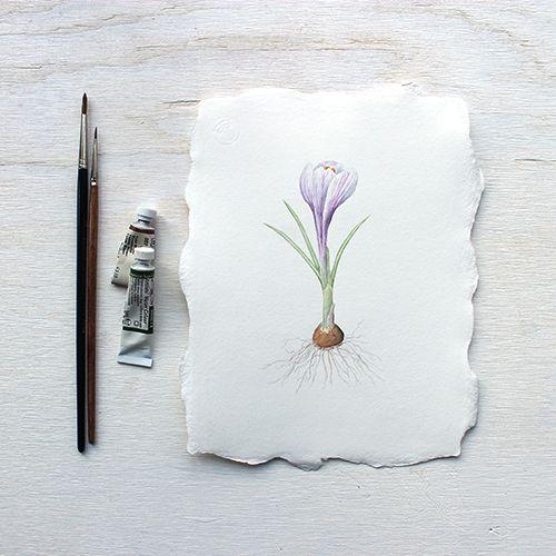 Purple crocus bulb: Original Watercolour Painting by Kathleen Maunder