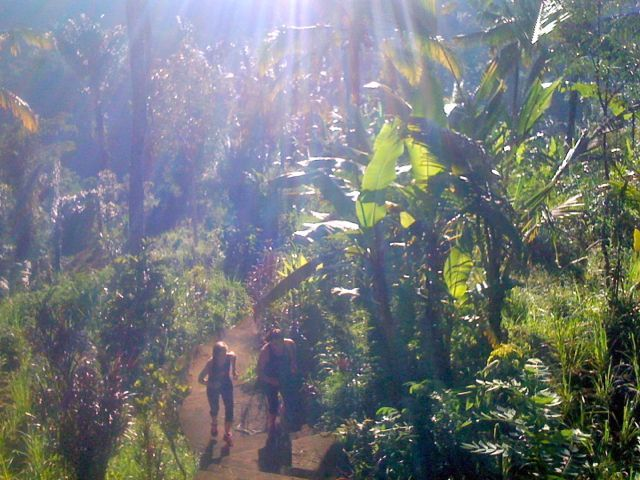 "Early morning run up our ""400 jungle steps"" is an amazing workout to our morning fitness training sessions. Legs!!! Treadmills and step machines don't come close to a Sharing Bali Fitness Retreat session. Love it! http://www.sharingbali.com/retreats/"