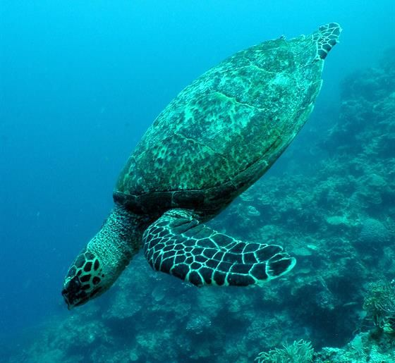 13 best TIPS Get a Zookeeping Job images on Pinterest Biology - marine biologist job description
