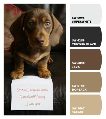 Shades of brown....    Paint colors from Chip It! by Sherwin-Williams - No wonder I like these colors - add a splash of red (to match the dog collar of course!) and you've got my fav colors!