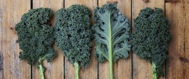 Soil Contamination on Kale Side Effects - Have you hopped on the superfood bandwagon yet?! Have you used kale in your food, your juices, or even for other hygienic purposes?! Well if you have, then you may be surprised to find out that there could be some negative kale side effects due to the possibility of soil contamination.