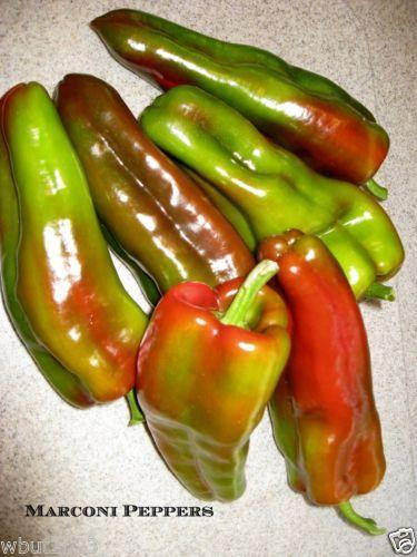 Pepper 'Sweet Giant Marconi' Or Italian Sweet Frying Pepper, 50 Organic Seeds