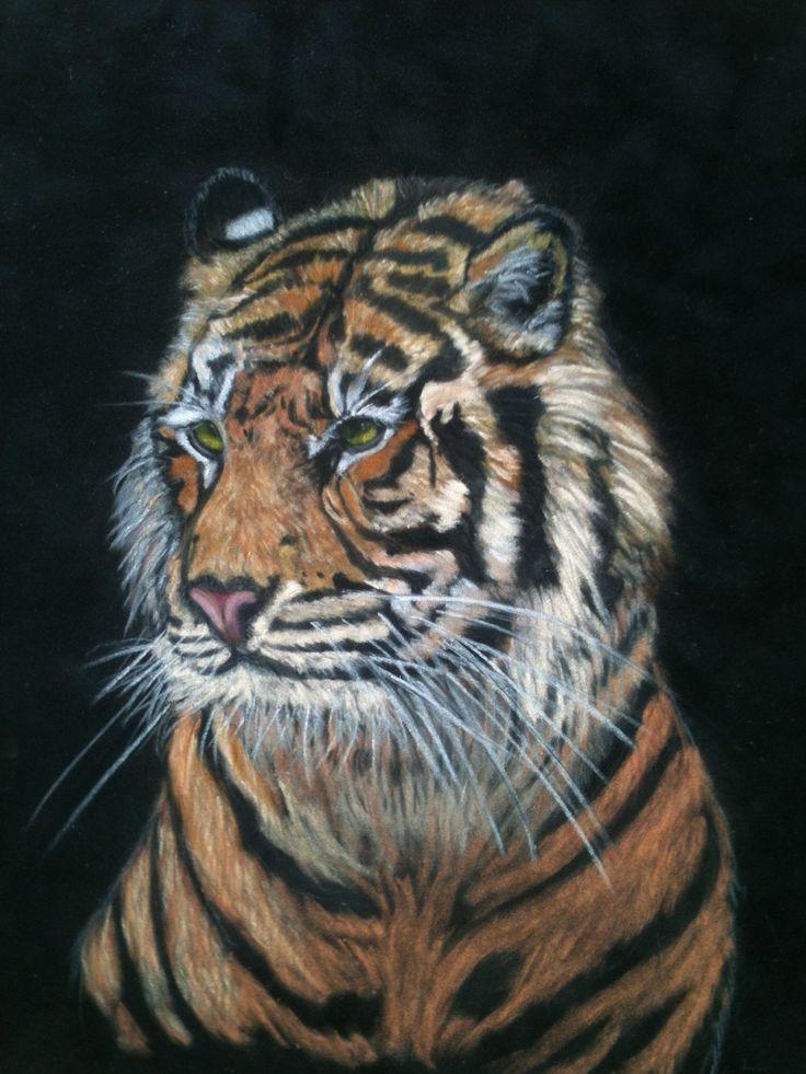 "Dublin Tiger Pastel 13 x 11"""