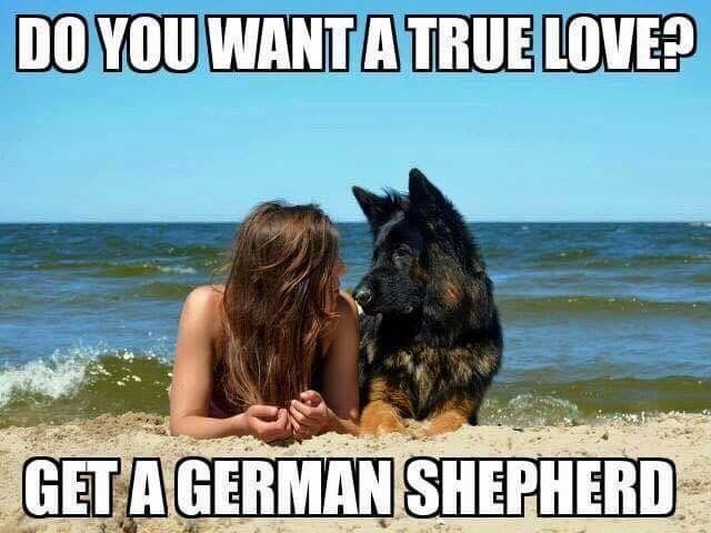 The German Shepherd.....true love. #truth #dogs #germanshepherd #gsd
