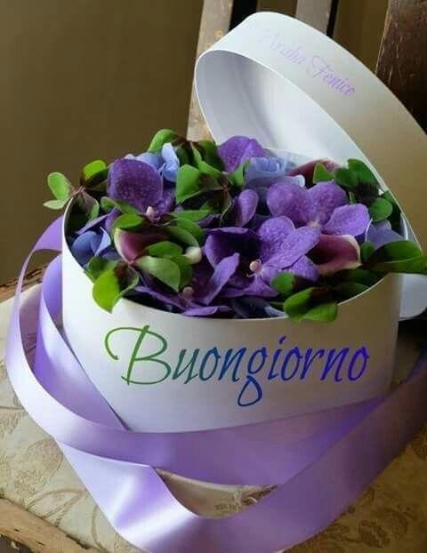 بونجورنو ورحمة الله وبركاته