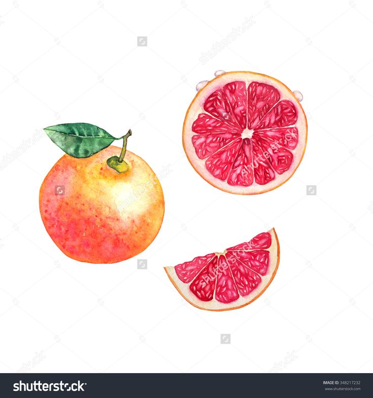 Grapefruit -  a hand-drawn watercolor illustration of grapefruit and cut grapefruit. Separated, isolated on white