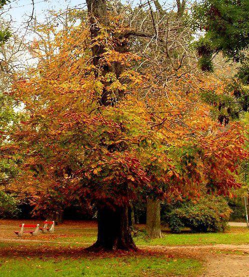 Elköszön a nap az ősztől,Őszi gyümölcsök..., Őszi délután,Szabó Rita: Ősz van,Szeptember...., Az ősz ezer arca...,Heltai Jenő Ősz..,Kányádi Sándor - Valami készül,Bunya Yasuhide: Ősz,Gyönyörű őszi képek..., - eckerkata Blogja - Saját fotózás,Advent - Karácsony,Ajándékaim,Anyák napja,Augusztus 20.,Csendélet - Dekoráció ,Csitáry-Hock Tamás,Csorbáné Ildikó ,Dalszöveg,Esti versek, képek ,Farsang - karnevál,Gulácsi Rozika ,Gyerekversek,Gyümölcs - ital - édesség,Gyönyörű tájképek ,Halloween…