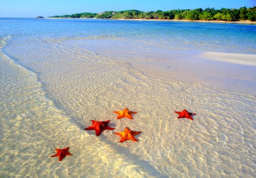 Starfish Colony, Bora Bora, French Polynesia. Take me there.